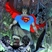 BATMAN SUPERMAN #3 <span class=ttlyear>2013</span>